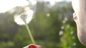 Mädchen brennt die Samen vom weißen Löwenzahn durch stock footage