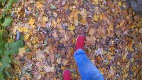 Mädchen das, das auf Boden gefallenen gelben und verwelkten Blättern am sonnigen Herbsttag geht stock footage