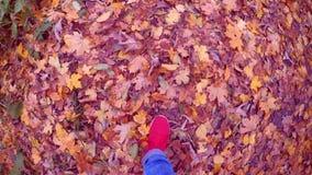 Mädchen das, das auf Boden gefallenen gelben und verwelkten Blättern am sonnigen Herbsttag geht stock video