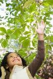 Mädchen, das bis zu den Blättern erreicht Stockfoto