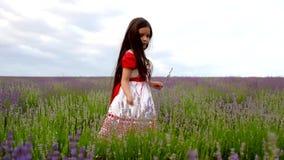 Mädchen, das Blumen auf einem Lavendel-Gebiet sammelt stock footage