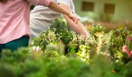 Mädchen, das Blumen von den Ställen wählt Lizenzfreie Stockfotos