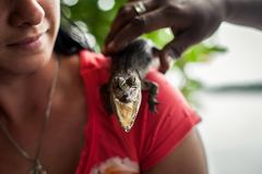 Mädchen, das ein kleines Krokodil hält Krokodil, das Zahnstruktur am Alligatorbauernhof in den Sumpfgebieten zeigt stockbild