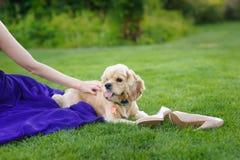 Mädchen, das einen Hund streicht Stockfoto