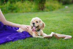 Mädchen, das einen Hund streicht Stockfotografie