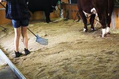 Mädchen, das einen Stall mit Kühen säubert Lizenzfreie Stockfotografie