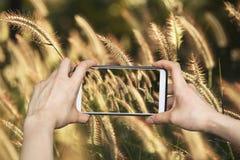 Mädchen, das Fotos am intelligenten Mobiltelefon in der Natur und im Sonnenlicht macht Lizenzfreie Stockfotografie
