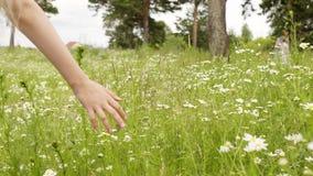 Mädchen, das grünes Gras und Kamille berührend geht stock video