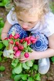 Mädchen, das Gruppe des roten frischen Rettichs im Garten hält Lizenzfreie Stockbilder