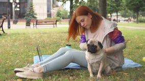 Mädchen, das ihren Pug heraus in einem Park kämmt stock video