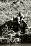 Mädchen, das im Frühjahr Wasser durch Kanal spielt Lizenzfreie Stockfotografie