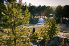 Mädchen, das im Wald sitzt Lizenzfreies Stockbild