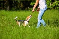 Mädchen, das mit einem Hund im Park spielt In den Händen des Stockes stockbilder