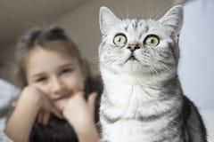 Mädchen, das mit einer britischen Katze spielt Stockbild