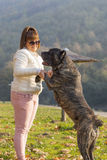 Mädchen, das mit ihrem Cane Corso-Hund im Park spielt stockfoto