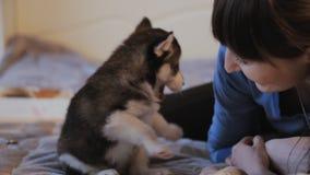 Mädchen, das mit nettem Welpen des sibirischen Huskys, Spaß spielt stock footage