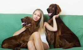 Mädchen, das mit zwei Irischen Settern sitzt Stockfotografie