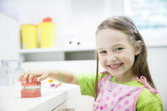 Mädchen, das Modell des menschlichen Kiefers mit zahnmedizinischen Klammern hält