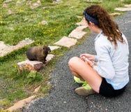 Mädchen, das Murmeltier in Rocky Mountain NP betrachtet Lizenzfreies Stockfoto