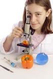 Mädchen, das orange Pfeffer mit Mikroskop betrachtet Stockfotografie
