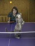 Mädchen, das Tischtennis mit einer Katze spielt Lizenzfreie Stockfotografie