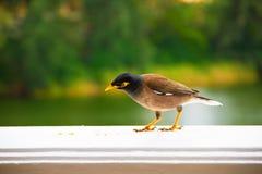 Mädchen, das Vogel isst Stockfoto