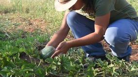 Mädchen, das Wassermelone überprüft stock video footage