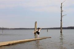 Mädchen in der Ballerina-Form Stockfotos
