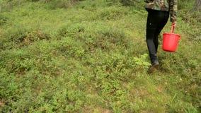 Mädchen in der kakifarbigen Jacke, die nach Pilzen sucht stock video