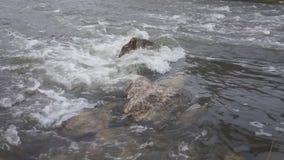 Mädchen, die auf Flussfallfischen flößen stock footage