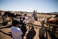 Mädchen, die das Pferd in der Ranch pflegen Lizenzfreie Stockfotos