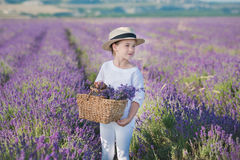 Mädchen in einem Strohhut auf einem Gebiet des Lavendels mit einem Korb des Lavendels Ein Mädchen auf einem Lavendelgebiet Mädche Lizenzfreies Stockfoto