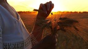 Mädchen in einem weißen Kleid hält ein Bündel Weizenähren auf einem Gebiet bei Sonnenuntergang stock video footage