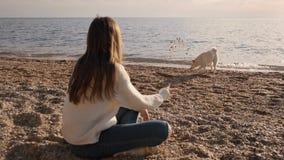 Mädchen in einer weißen Strickjacke wirft oben die Steine und spielt mit ihrem siba inu netten männlichen Haustier auf der Ozeank stock video
