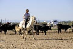 Mädchen Gardian, der eine Herde von Stieren bearbeitet Stockbild