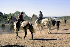 Mädchen Gardians, der eine Herde von Stieren bearbeitet Stockfoto