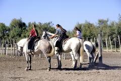 Mädchen Gardians, der eine Herde von Stieren bearbeitet Lizenzfreies Stockfoto
