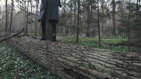 Mädchen geht auf den gefallenen Baum stock video