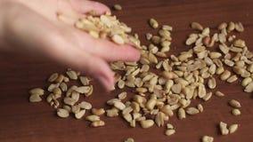 Mädchen gießt eine Handvoll Erdnüsse auf dem Tisch CU stock video footage