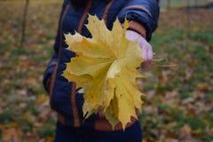 Mädchen hält gelbe Blätter in der Hand Stockfoto