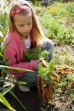 Mädchen im Gemüsegarten Stockbild