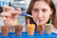 Mädchen im Labor des Lebensmittels prüft Hülsenfruchtkorn Lizenzfreie Stockfotos