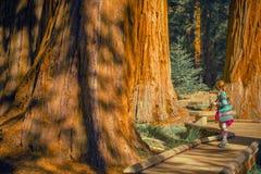 Mädchen im Mammutbaum-Wald lizenzfreie stockbilder