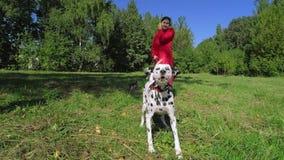 Mädchen im roten Mantel ihre Hunde im Park gehend stock video footage