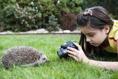 Mädchen möchte ein Foto des Igelen machen Stockbild