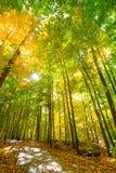 Mädchen macht ein Foto Gehweg durch sonniges Holz Lizenzfreie Stockfotografie