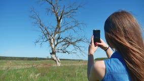 Mädchen macht Fotos eines Baums touristisches haltenes bewegliches nehmendes Foto des Telefons trockene Baumlebensstilnatur Lizenzfreies Stockbild
