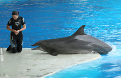 Mädchen mit Delphin während einer Show Lizenzfreie Stockfotografie