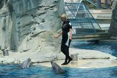 Mädchen mit Delphinen während einer Show Lizenzfreie Stockfotos