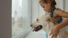 Mädchen mit dem Hund, der heraus das Fenster schaut stock video